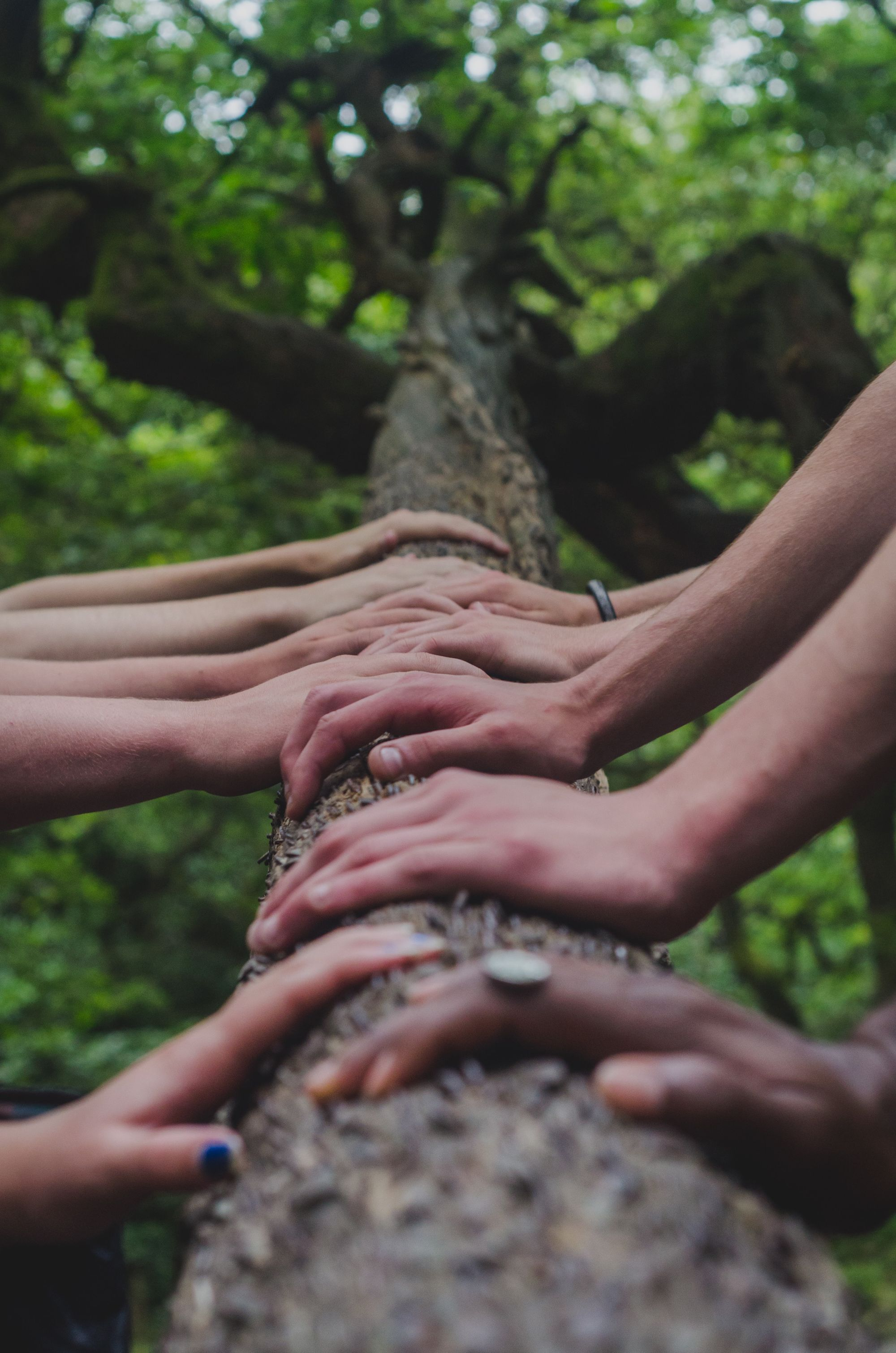 Group of hands on a tree