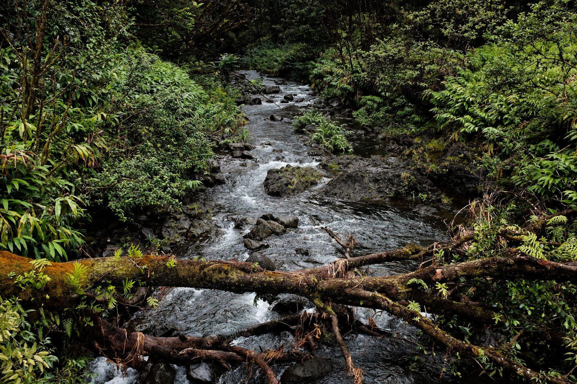 Tree that has fallen across a stream